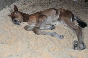 new born filly by Minging