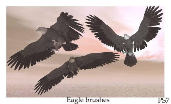 Eagle brushes by ElizavetBrushes