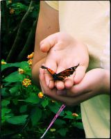 Butterfly in her hands by XDElisabeth69