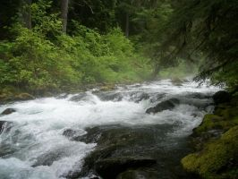 River in Olympic National Park by pokemontrainerjay