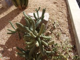 Cactus 3 by Spiteful-Pie-Stock