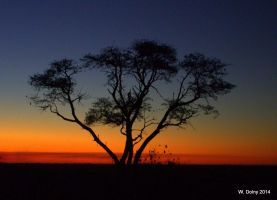 African Sunset by lenslady