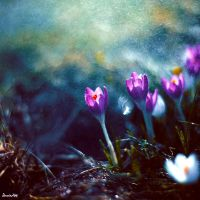 Spring by BaxiaArt