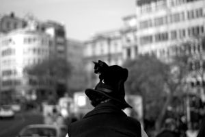 a.man.with.a.cat.hat. by mormenekshe