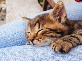 Sleeping kitty by Smile-Denise