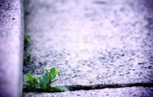 Leaf by iso-50