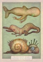 Peculiar Marine Species by V-L-A-D-I-M-I-R
