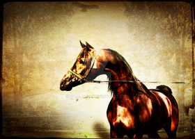 The Bay Stallion by comlodge