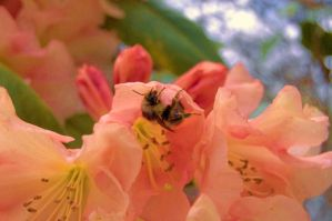 Bee by AmyMaeFeely