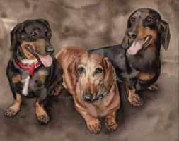 Dachshund Gang by RamonaQ