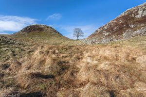 Sycamore Gap (Naked) by Pistolpete2007