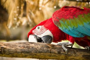 Greenwing Macaw by TimGrey