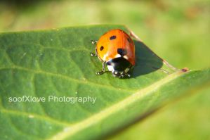 a ladybug by soofXlove4ever