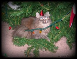 Lily IN the Christmas Tree by caybeach