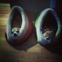 Comfy New Beds by Ace-Of-Angels-xx