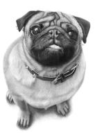 Cedric The Wonder Pug by JaneyArt