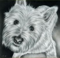 Dylan - West Highland Terrier by Jumbie384
