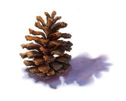 Pinecone Finished by lesliesketch