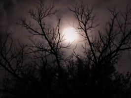 Moonlight Through Trees 7 by DarkMaiden-Stock