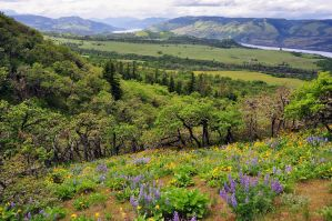 Looking west from McCall Point Trail by greglief