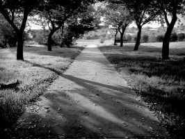 Nostalgic Path BW by MediaDesign