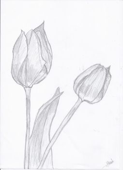 A sketch in tulips by childrenofkhaos