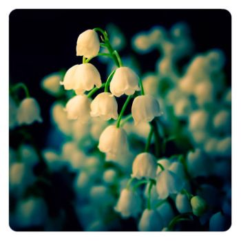 lily of the valley by ailenn