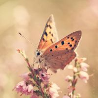 Flutter through it All by Oer-Wout