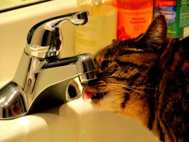 Love water tap. by vfrrich