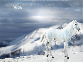 ice kingdom-banner. by cas887
