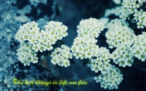 Best Things in Live by truelove-knot