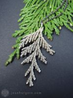 Macrocarpa Leaf Necklace by jeanburgers