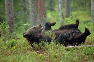 Roll the bear :D by Mateuszkowalski