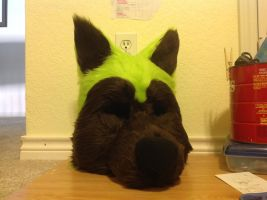 Forest the Husky Head WIP by FoxTone
