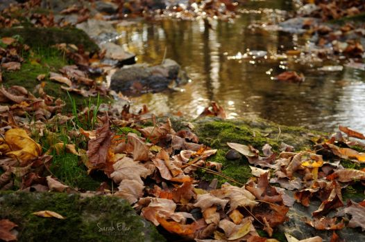 Leaves by RobertsPhotography