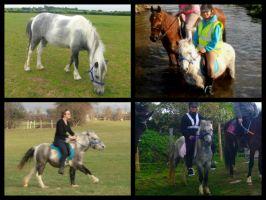SS Texas Cowgirl, Dartmoor Hill Pony Showjumper by StarCrossedPsycho