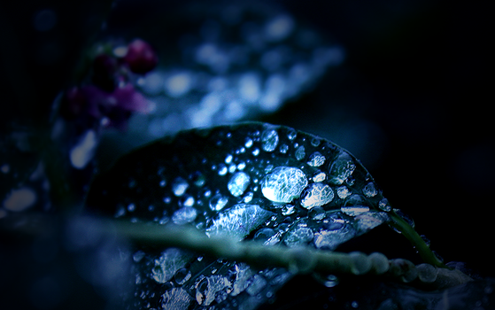 After rain by mrsCritic