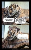 Sympathy Among Cubs by HeWhoWalksWithTigers
