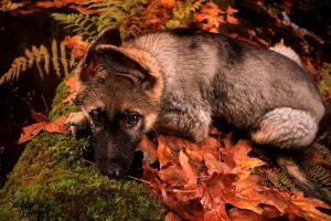 Cabal in the Leaves by NaturePunk