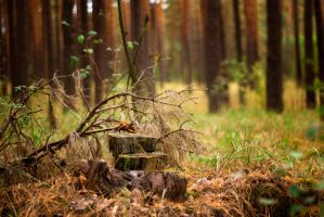 forest chair stock by amka-stock