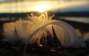 Sunlit Feather by PhotonicBohemian