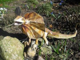 Frill-necked Lizard papercraft by TimBauer92