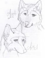 Some wolf sketches by AmericanAngel117
