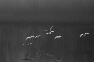 Flight into the swamp by s-ascic