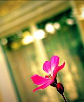 flower power. by zolezozole
