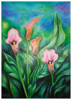 Arum Lily by Enzoemicky