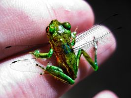 flying frog by shloganshlong
