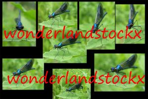 Metallic Blue Dragonfly - different poses high res by wonderlandstockX