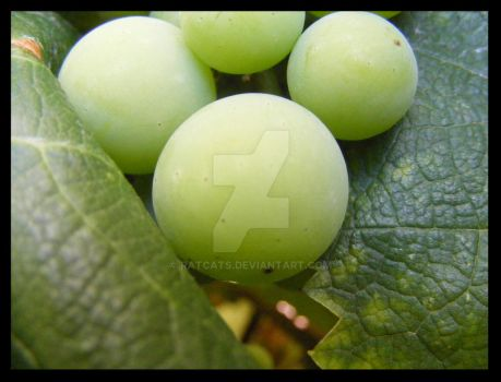 Poser Grapes by ratcats