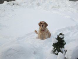 Dog In The Snow by 68cupcake